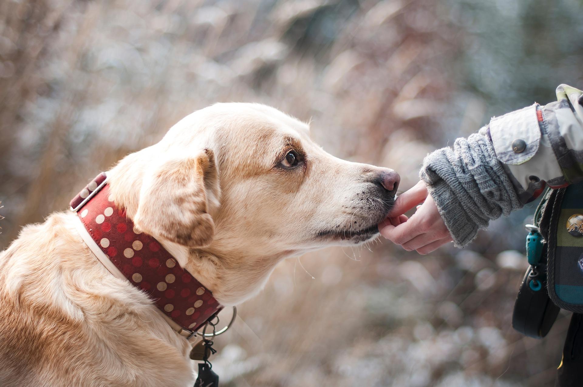 Umgås med hunden