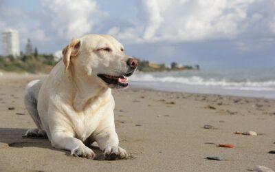 Så ger du din hund ett långt och glädjefyllt liv