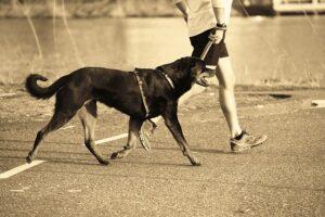 traning-med-hund